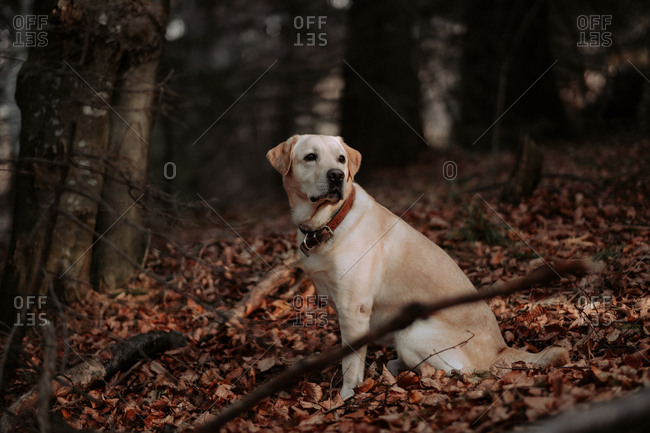 Dog sitting in leaves in a forest