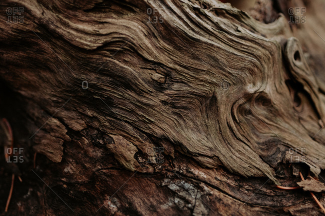 Detail of wood grain on a tree