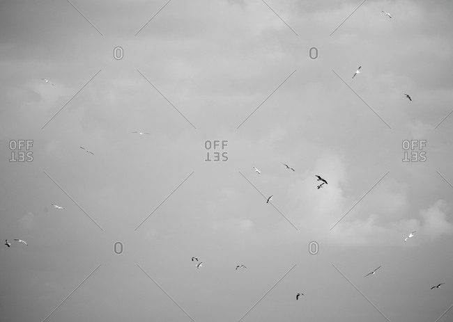 Birds flying in cloudy sky