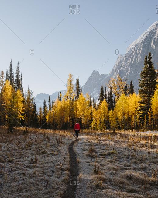 Woman walking on trail in autumn near Floe Lake in British Columbia, Canada