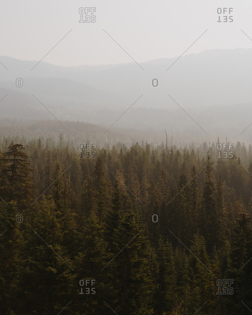 Dense evergreen forest in rural Whistler, British Columbia, Canada