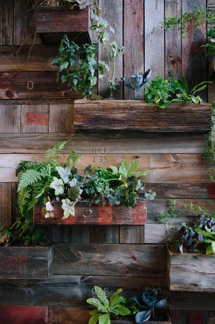 Urban garden on a wooden wall