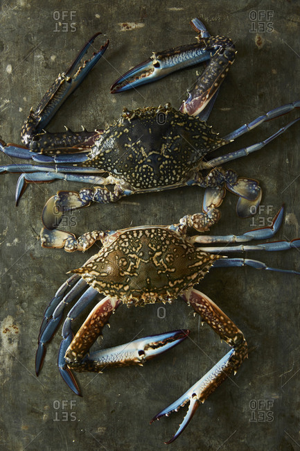 Overhead view of two crabs