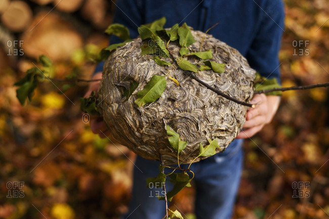 Young boy discovers fallen wasp nest in forest