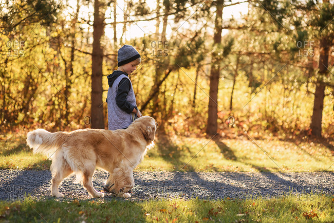 Young boy walking a golden retriever in the morning