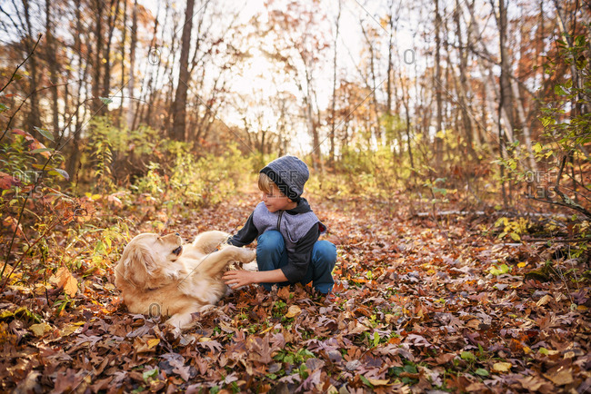 Young boy plays with a golden retriever in the fall