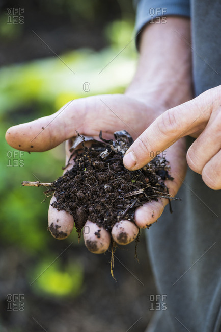 Farmer showing micro-organisms and health of the growing soil