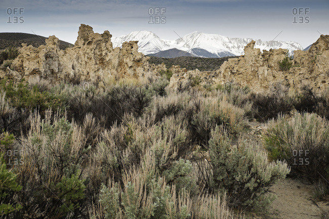 Rock formations and vegetation of Mono Lake with Sierra Nevada Mountains in the background in Eastern California, USA
