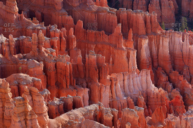 Hoodoos of the Claron Formation at sunrise in Bryce Canyon National Park, Utah, USA