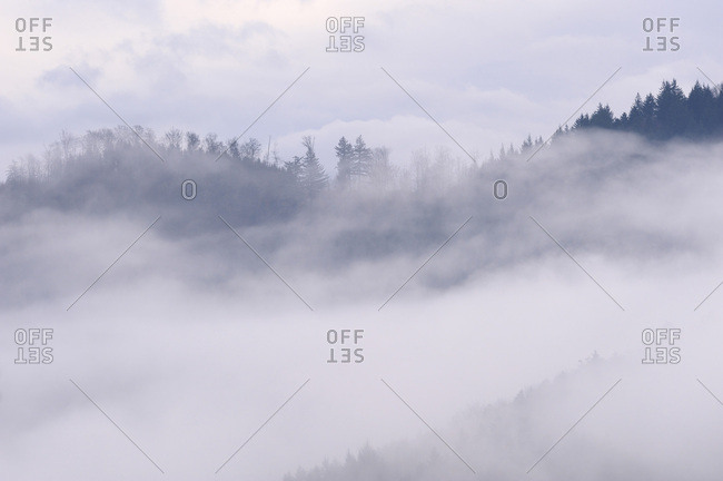 Forest trees standing out of the fog in the valley of the Black Forest in Baden-Wurttemberg, Germany