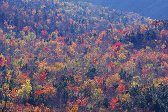 Overview of the Forest with autumn foliage on a sunny day in White Mountains National Forest in New Hampshire, New England, USA