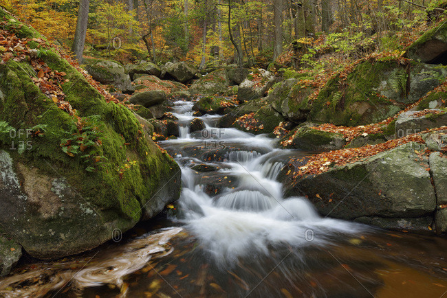 Water flowing in the River Ilse with autumn leaves, Ilse Valley along the Heinrich Heine Trail in Harz National Park, Germany
