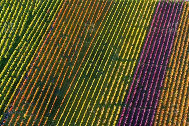 Germany- Stuttgart- aerial view of vineyards at Kappelberg in autumn