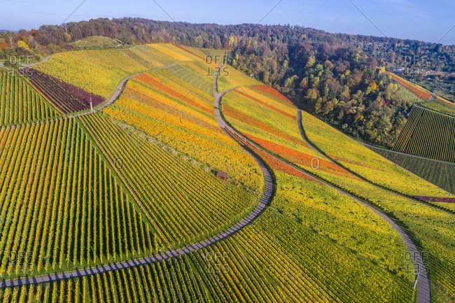 Germany- Stuttgart- aerial view of vineyards at Kappelberg in autumn