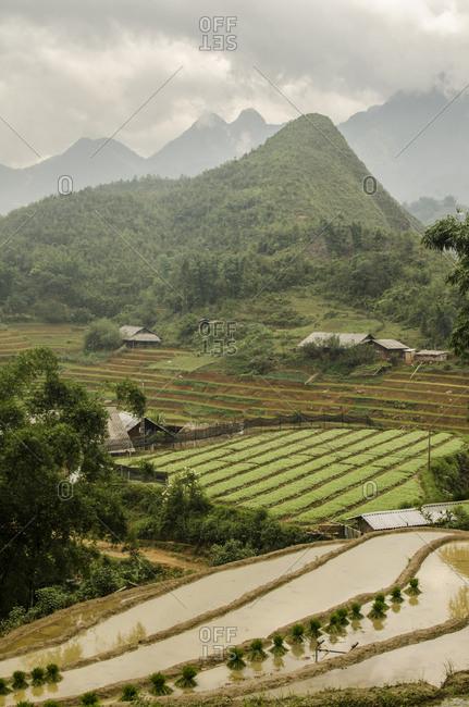 Sapa rice fields, Vietnam