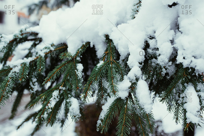 Snow on the winter tree branches