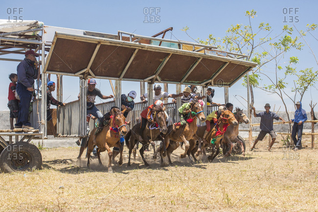Indonesia, Sumbawa Besar - September 21, 2017: Jockeys sitting on racehorses at starting gate during horse racing