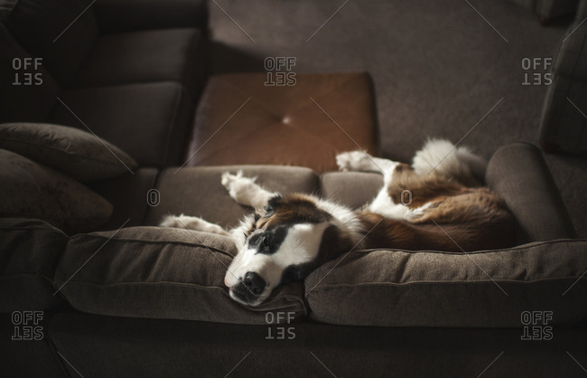 High angle view of dog lying on sofa at home