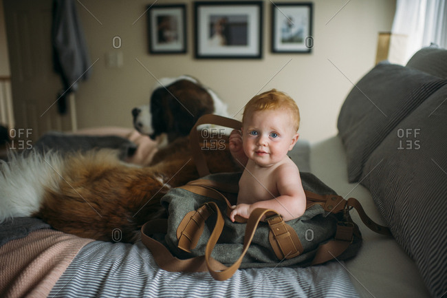 Portrait of cute baby boy sitting in shoulder bag by dog on bed