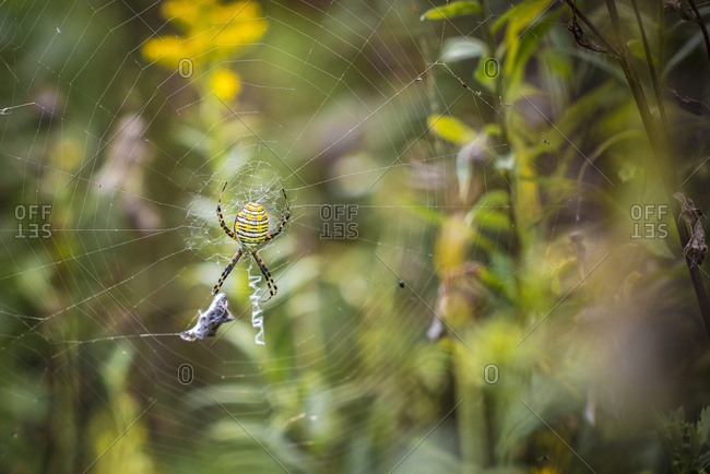 Close-up of spider on wed