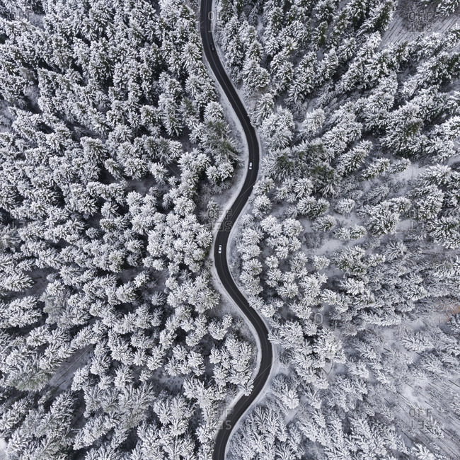 Winding road and forest covered in fresh snow in Poland
