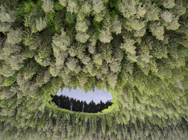 Upside down view of a lake in the forest