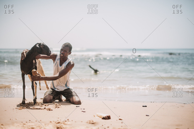 Dakar, Senegal - November 30, 2017: Black African man sitting on sand with goat at the seaside