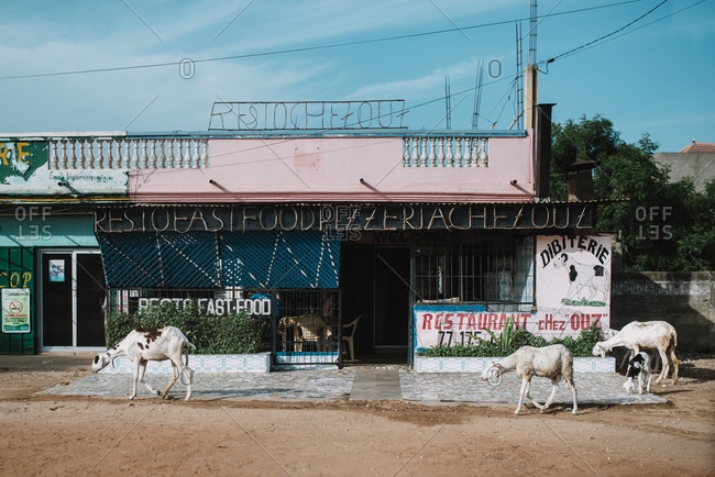 Dakar, Senegal - November 30, 2017: Exterior view of poor city district with goats pasturing around in sunlight