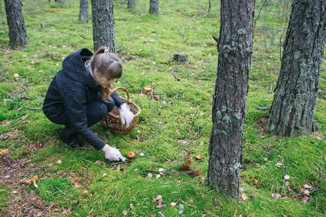 Young woman in warm clothing picking mushrooms on green lawn in woods