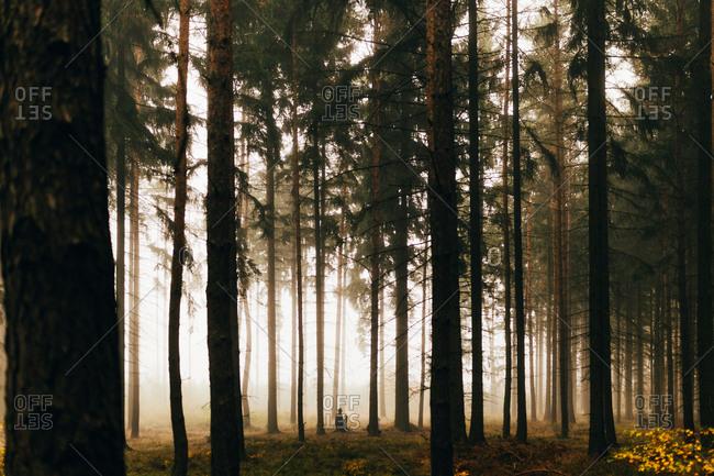 Traveler in dark foggy woods