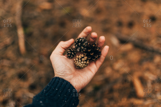Crop male hand showing few pine cones above ground