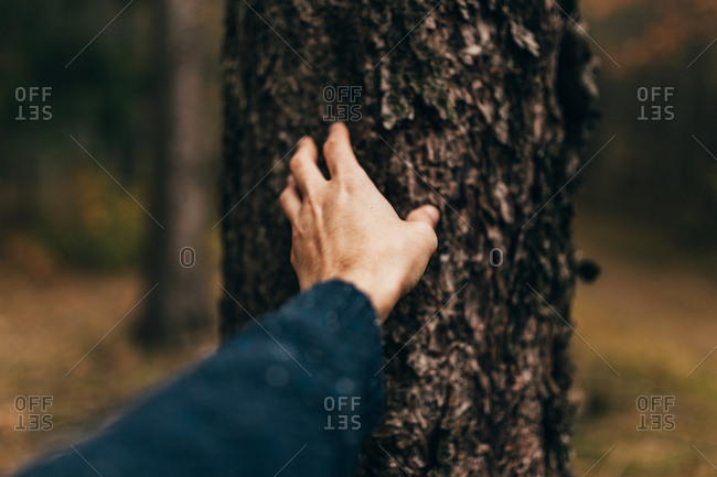 Crop male hand exploring rough surface of tree trunk bark
