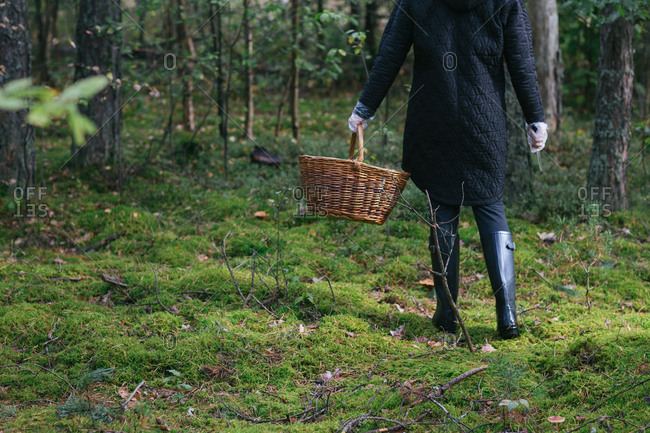Crop woman collecting mushrooms in woods