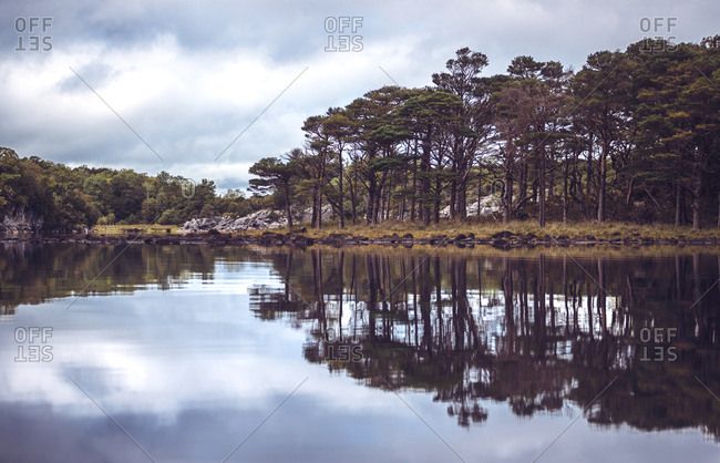 Tall trees growing on shore of calm lake in Killarney National Park, Ireland