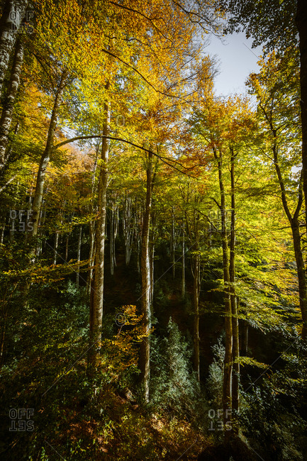 Landscape of a beech forest