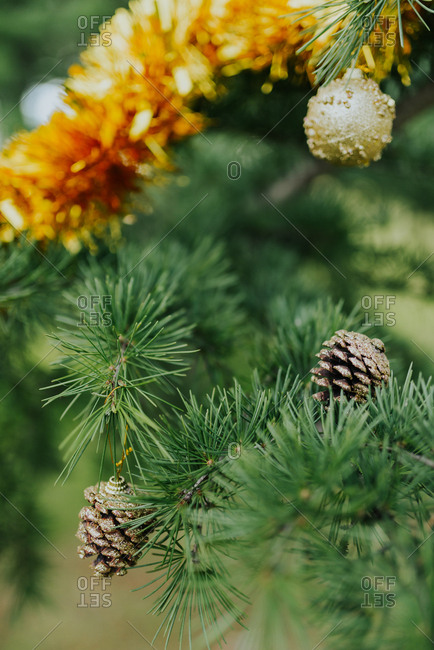 Close-up shot of conifer branches decorated with baubles and cones