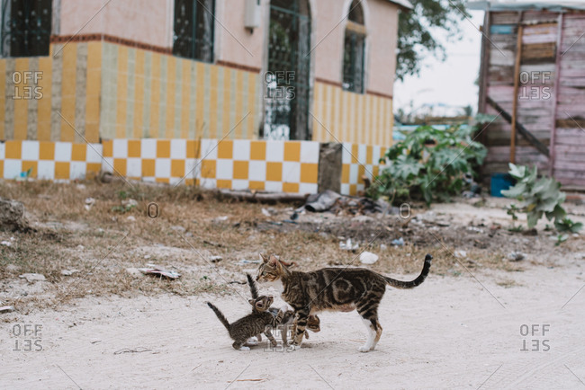Stray cat and its kittens standing on street in poor neighborhood