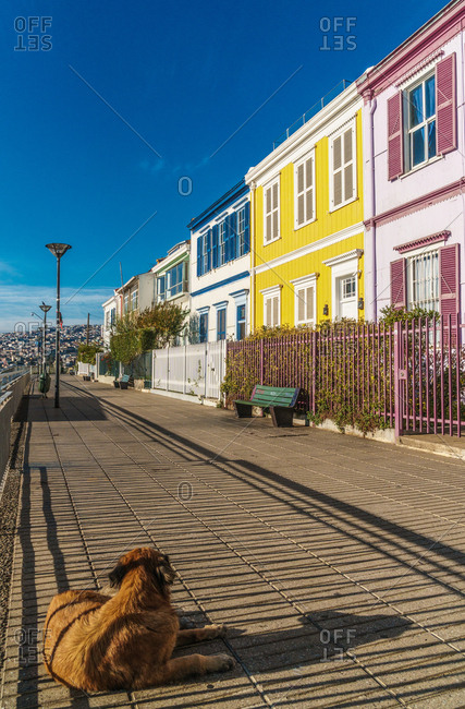 Brightly colored clapboard houses on Paseo Atkinson with dog in foreground, Valparaiso, UNESCO World Heritage Site, Chile, South America