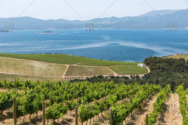 Coastal winery on the hills of the Dalmatian Coast, Croatia, Europe