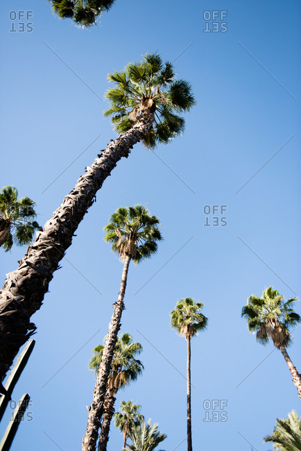 Low angle view of palm trees in the Majorelle Garden, Marrakesh, Morocco