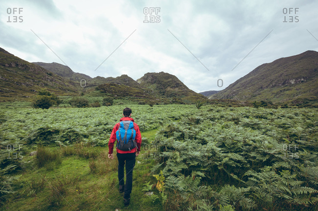 Rear view of male hiker walking on green countryside landscape