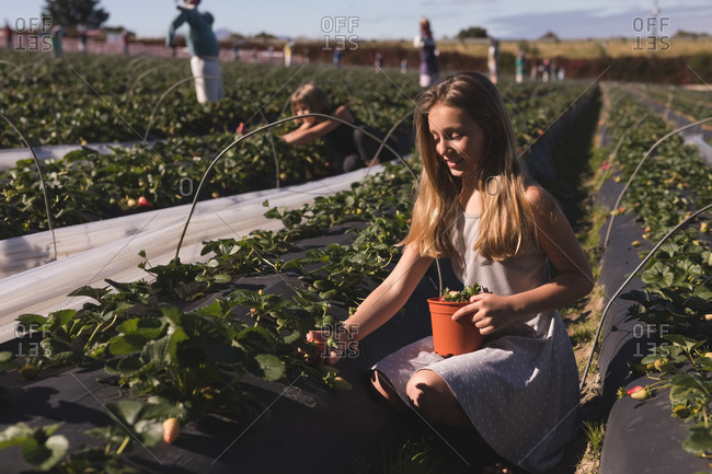 Young woman sitting down holding basket and plucking strawberries  on a sunny day