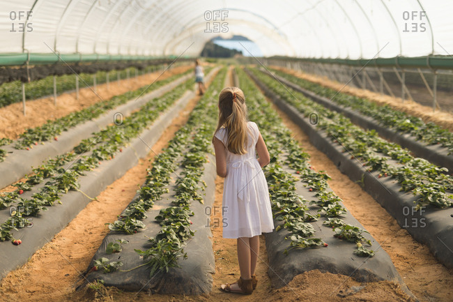 Rear view of girl standing near strawberry plantation in greenhouse