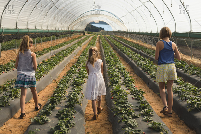 Rear view of mother and kids standing near strawberry plantation in greenhouse