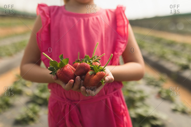 Close-up of girl holding freshly plucked strawberries in her hands