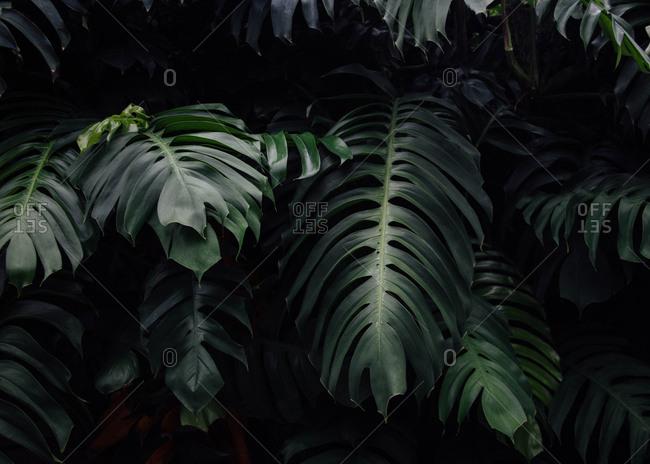 Detail shot of plant