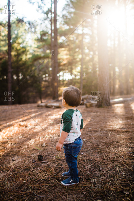 Toddler walking in a forest