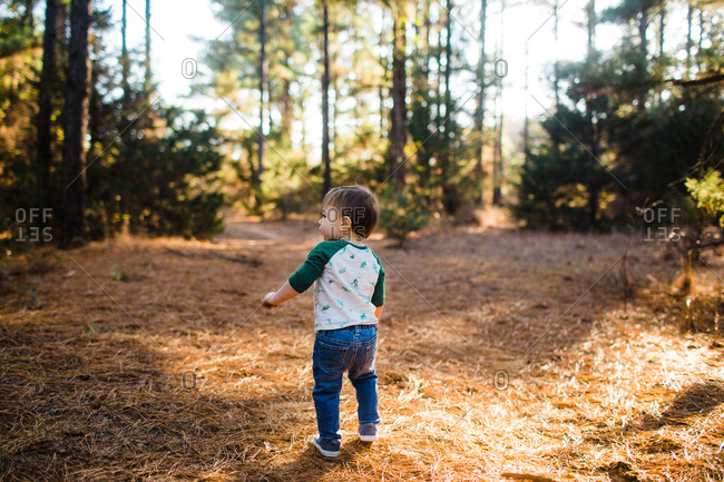 Rear view of toddler walking in a forest during fall