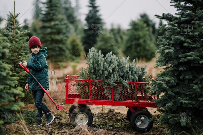 Boy pulling wagon with a Christmas tree