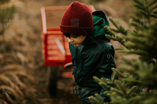 Boy pulling wagon on a Christmas tree farm